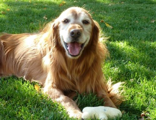 Dogs in Cohousing…What's the Scooper?