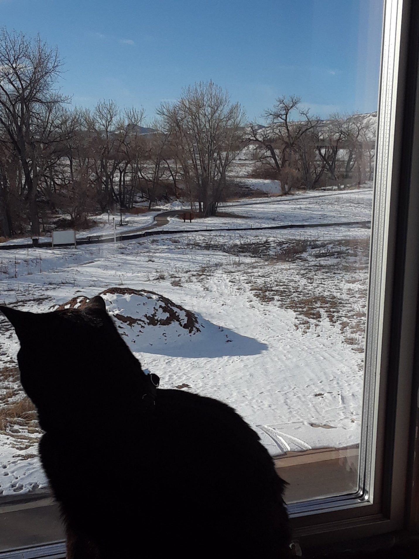 The cats enjoy the southern view from my new home office. This is about the same view we'll enjoy from the Gatehouse when it is built.